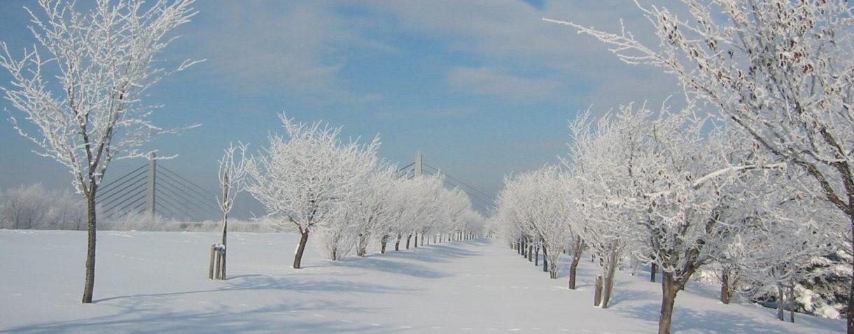 旭川の冬の風景
